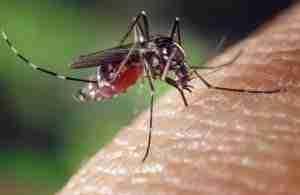 Mosquito Fogging Dallas Texas